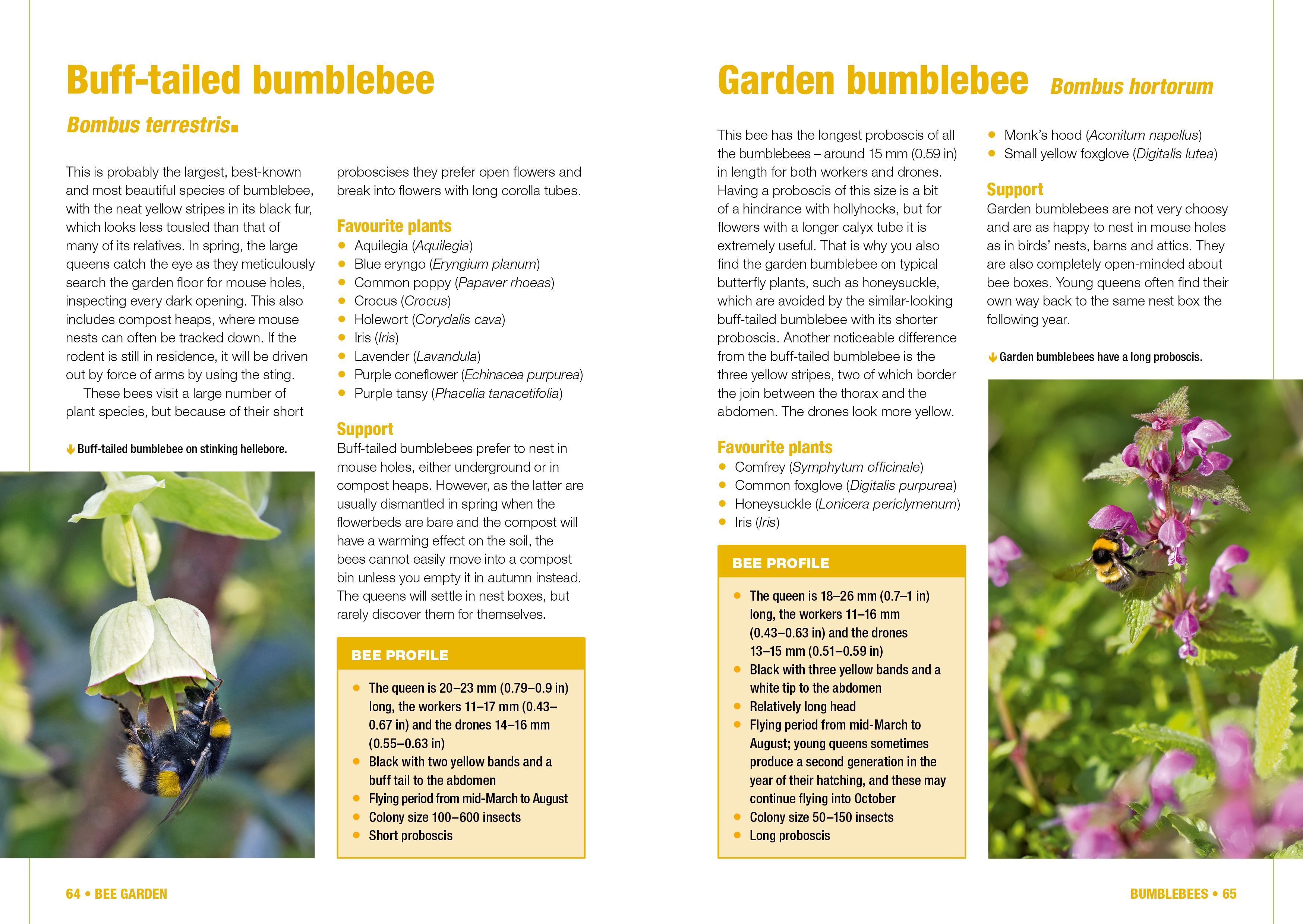 Big Garden Bee Count Manual Guide
