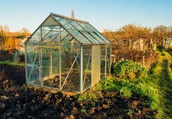 How to plan what to grow on your allotment this year