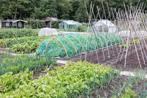 What should I grow on my allotment?