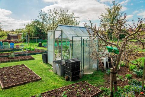 Can I have a shed, greenhouse or polytunnel on an allotment?