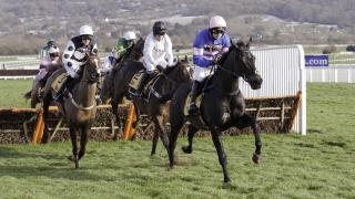 Cheltenham Festival 2018: how to pick a horse and place your bet