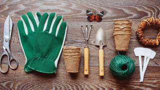 What should I do in the garden in March? 10 jobs you can do today